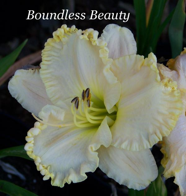 Boundless Beauty