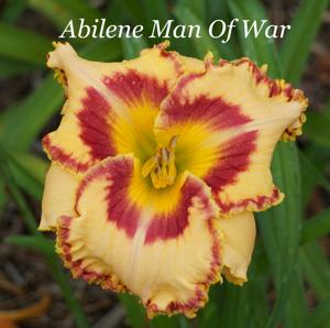 Abilene Man Of War