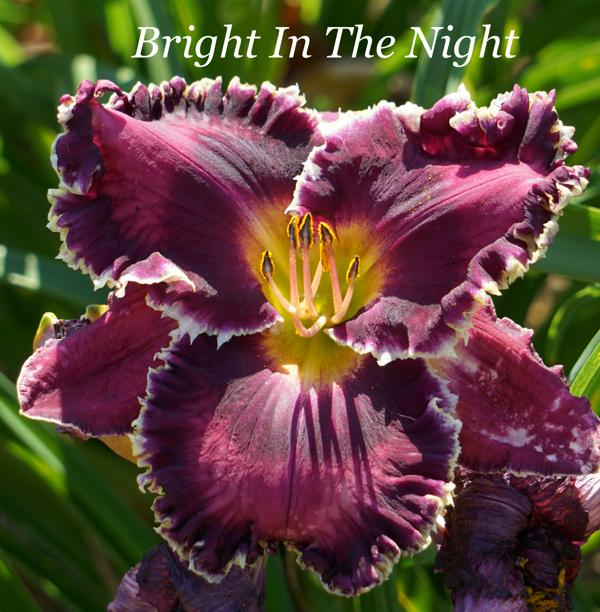 Bright In The Night 001