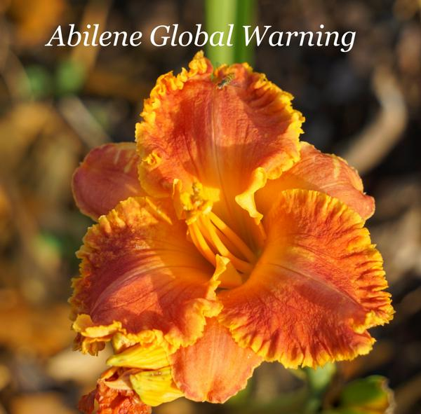 Abilene Global Warning