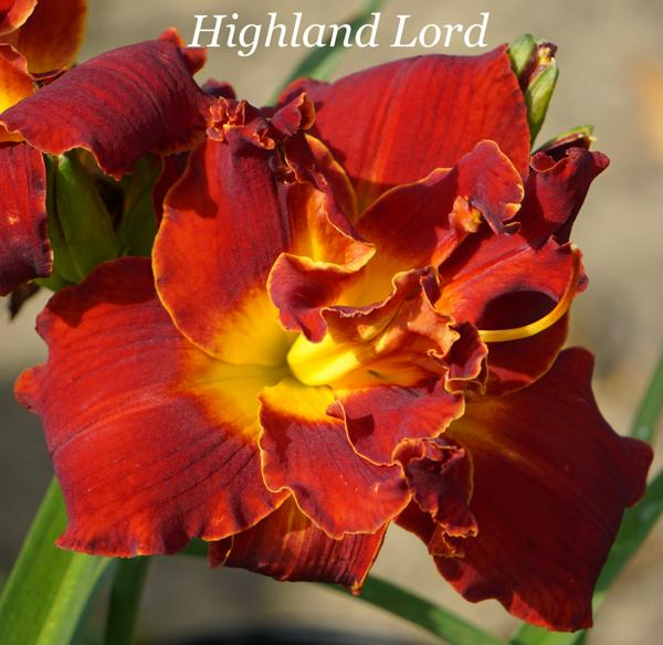 Highland Lord 001