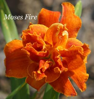 Moses' Fire