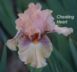 Cheating Heart