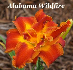 Alabama Wildfire