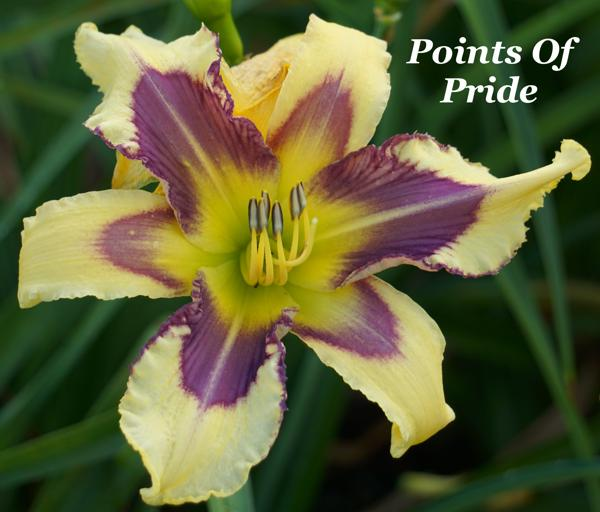 Points Of Pride3